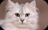 Animal Crackers Cat Food
