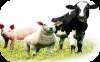 Animal Crackers Livestock Feed